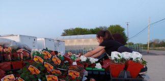 Dramaty producentów kwiatów już nie tylko w Europie