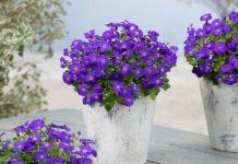 Byliny wiosny – żagwin