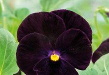 Aktualne wieści z branży kwiaciarskiej na świecie