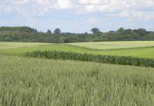 Po co rolnikom zrównoważone rolnictwo?