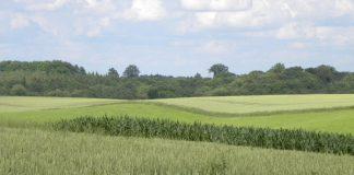 Rolnictwo musi być priorytetem