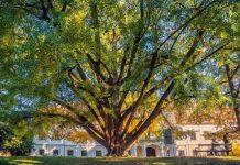 Drzewa z niezwykłą historią