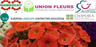 Wspólny głos o pomoc dla branży roślin ozdobnych