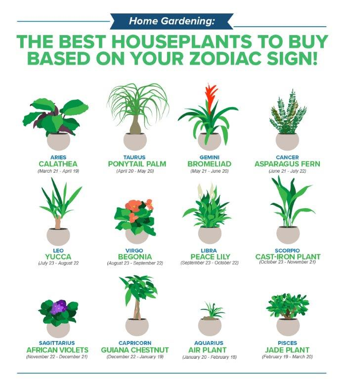 Rośliny a znaki zodiaku