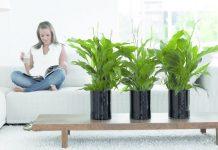 Znaki zodiaku a rośliny