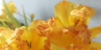 Branża kwiatowa usycha