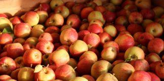 Raz na wozie, raz pod… Handel jabłkami wiosną 2020