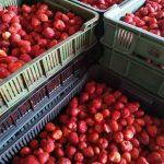 Owoce jagodowe dwa lub trzy razy droższe? – dyrektor TB Fruit twierdzi, że to możliwe