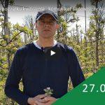 Komunikat sadowniczy – Robert Binkiewicz, Agrosimex 28.04.2020