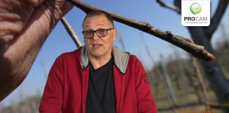 Komunikat sadowniczy PROCAM 03 z 02.04.2020