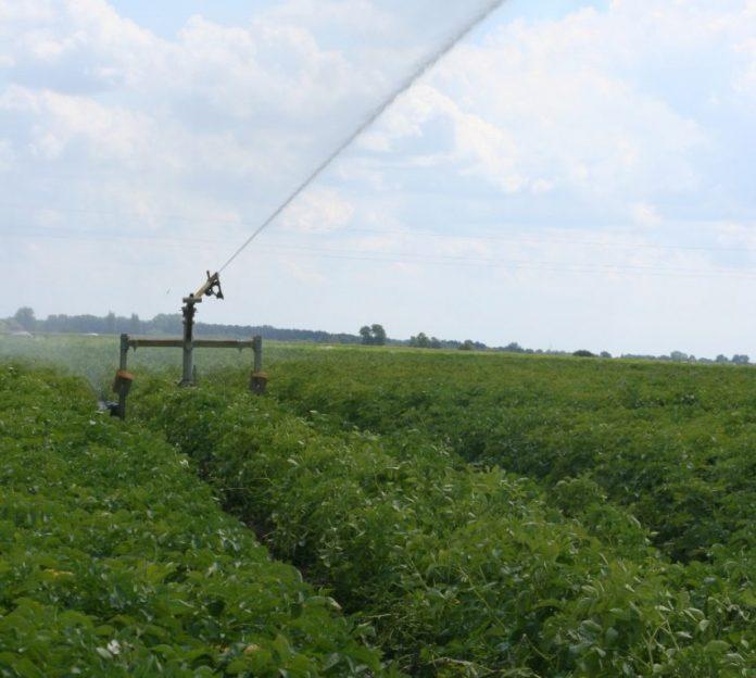 Uprawa ziemniaków - deszczownie