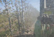 Parch jabłoni 2020: Majowy weekend pod znakiem parcha!