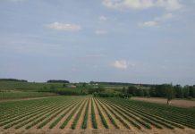 """""""Modernizacja (obszar D)"""" i """"Restrukturyzacja małych gospodarstw"""" do 30 czerwca"""
