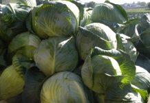 Nowe standardy w produkcji żywności