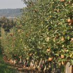 Jaka przyszłość czeka polskie rolnictwo?
