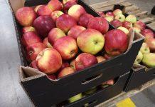 Eksport polskich jabłek do Indii