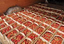 Poniedziałkowe ceny czereśni i truskawek w hurcie