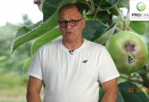 Komunikat sadowniczy PROCAM 15 z 24.06.2020