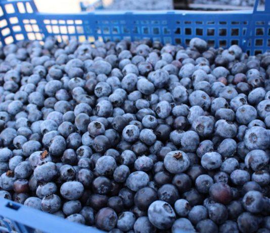 Cennik owoców miękkich u pośredników – 6 lipca 2020