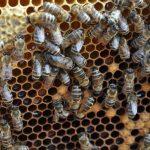 Więcej pieniędzy dla pszczelarzy