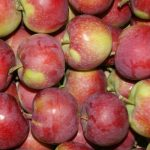 Ceny jabłek deserowych 2020: Delikates i Paulared