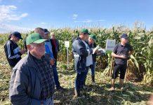 Odmiany kukurydzy cukrowej Syngenta – fotorelacja z prezentacji polowych w Piołunowie