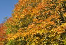 Czas na polską złotą jesień?