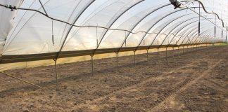 Czysta gleba dla zdrowych plonów