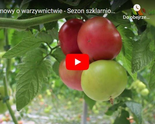 Sezon szklarniowy 2020 – Rozmowy o warzywnictwie
