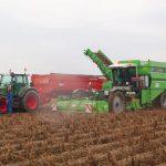 NEPG: Rynek ziemniaków w Europie 2020