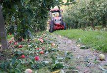 Żadne rynkowe wskaźniki nie tłumaczą niskiego poziomu cen jabłek przemysłowych