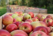 PROFIFRUIT – Zbiory jabłek 2020 – Konferencja online!