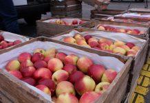 Ceny jabłek na Broniszach – relacja z rynku, 1.10.2020