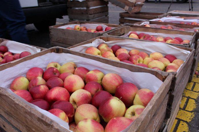Bronisze - jabłka ze zbiorów 2020