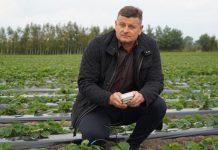 Komunikat DORADCA JAGODOWY – Plantacje truskawek jesienią, 08.10.2020