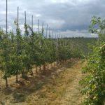 Ponownie na sprzedaż gospodarstwo sadownicze o powierzchni 180 hektarów