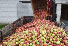 Ceny jabłek przemysłowych: Pojawiają się oferty 0,50 zł/kg
