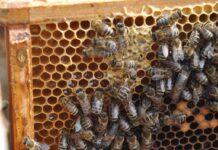 To nie był dobry rok dla europejskich pszczelarzy