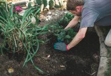 Aranżacja ogrodu przydomowego – wskazówki i inspiracje
