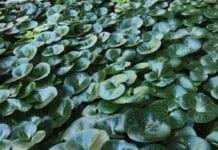 Dzień Wiecznie Zielonych Roślin