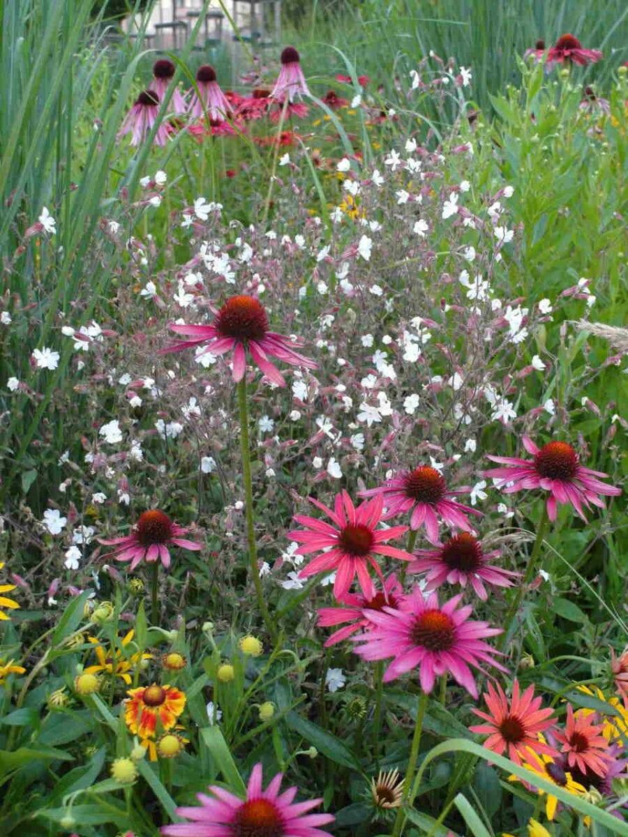 Ogród przyjazny owadom zapylającym