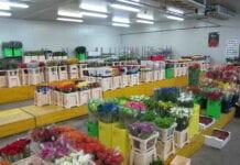 Niderlandy – nieuchronna konsolidacja kwiaciarstwa