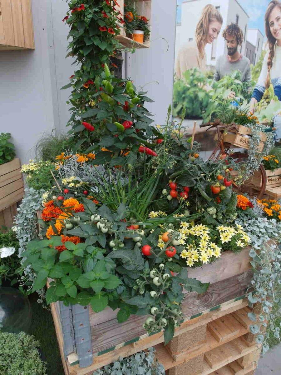 Rośliny ozdobne z warzywami