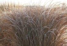 Trawy ozdobne – nie tylko w miastach