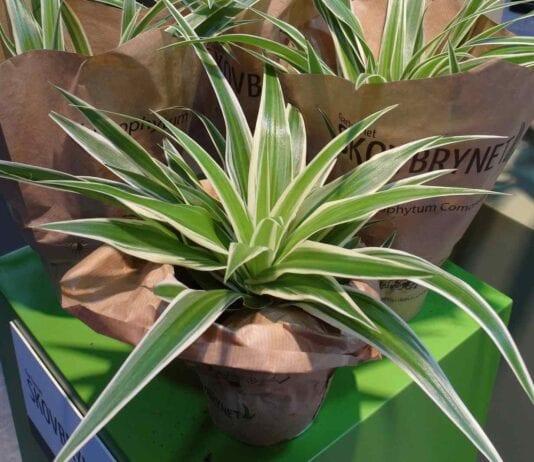 Rośliny doniczkowe – ważny temat