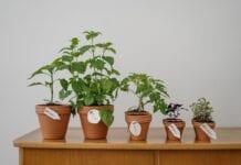 Pielęgnacja roślin doniczkowych – tanie i ekologiczne patenty