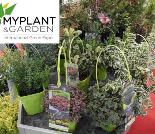 Targi Myplant & Garden dopiero w lutym 2022 r.