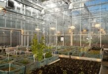 Nowoczesne systemy w służbie roślin – Arboretum Wirty