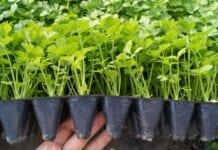 Biorozwiązania dla warzyw i rozsady w gruncie i pod osłonami. Zaproszenie na webinarium.