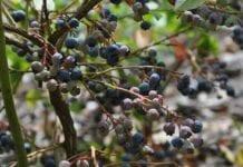 Zapobieganie suszy rolniczej – brak spójności i konsekwencji